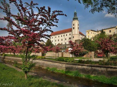 Zámek / fotogalerie / Pohled na zámek ze břehu Veličky