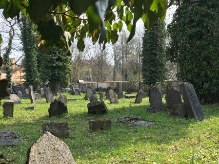Židovský hřbitov / fotogalerie / IMG_3384