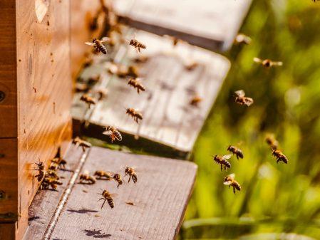 Včelařská stezka